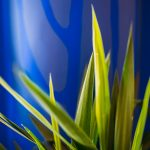plante bleu klein